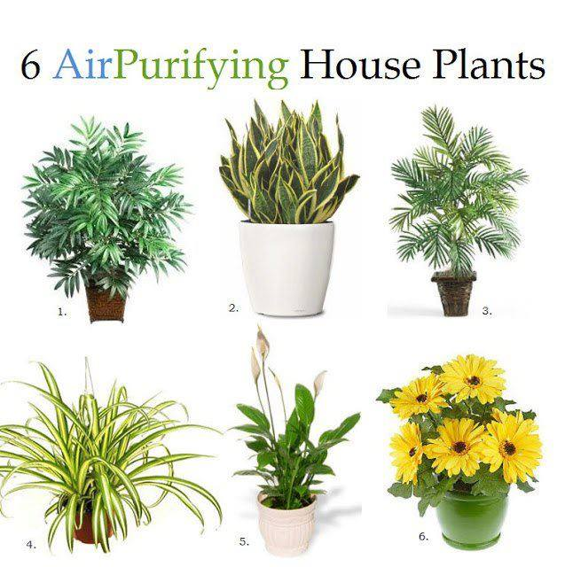 6 Natural Air Purifiers