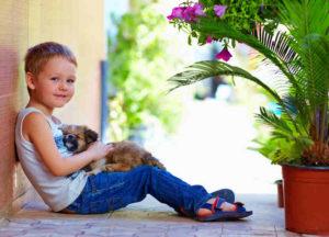 petting-hobby-opt