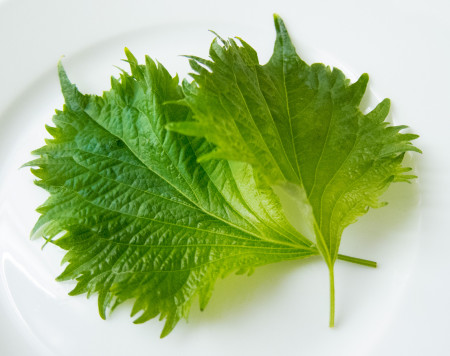 Excellent Alternatives to Mint Leaves